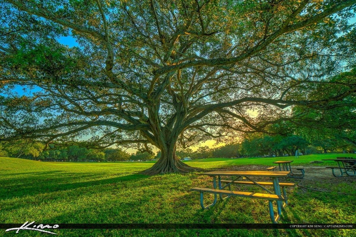 Green team advisory committee proposes regulations to enhance hollywood's tree canopy